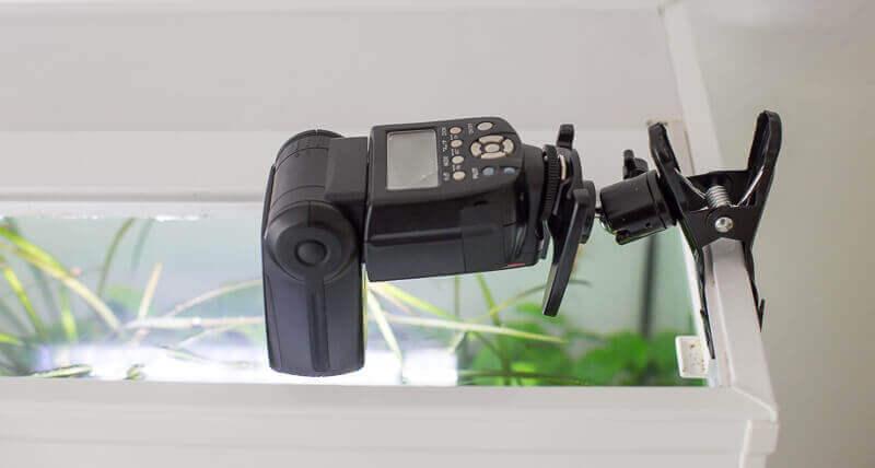 Aquarien fotografieren, Blitzklammer mit Systemblitz im Einsatz
