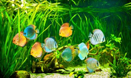 Aquarium Außenfilter, besser als Innenfilter?