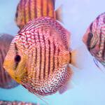 Aquarien fotografieren